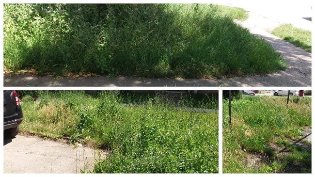 sesizare ct iarba