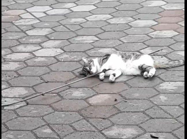 pisica strapunsa