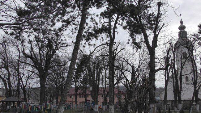 copacui ciuntiti 1
