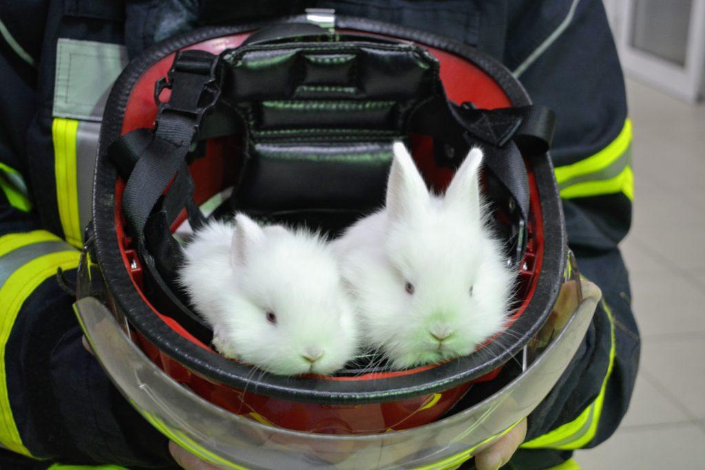 pompierii paste