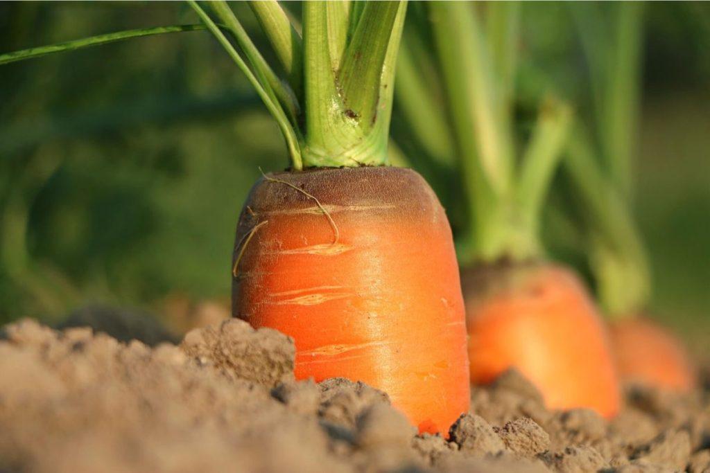Cover Photo Ești un agricultor aflat la început de drum Iată 3 lucruri la care trebuie să fii atent 2