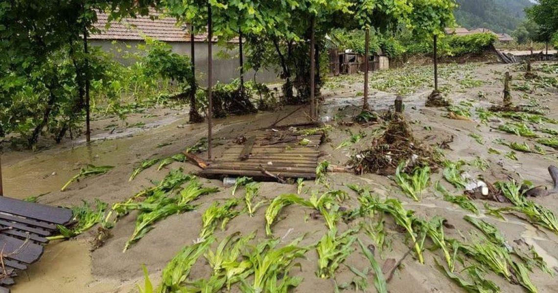 culturi inundate